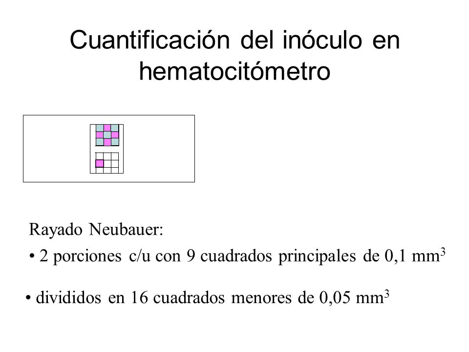 Cuantificación del inóculo en hematocitómetro