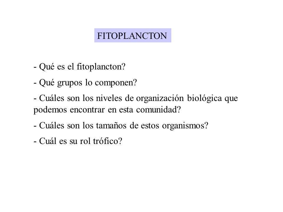 FITOPLANCTON Qué es el fitoplancton Qué grupos lo componen
