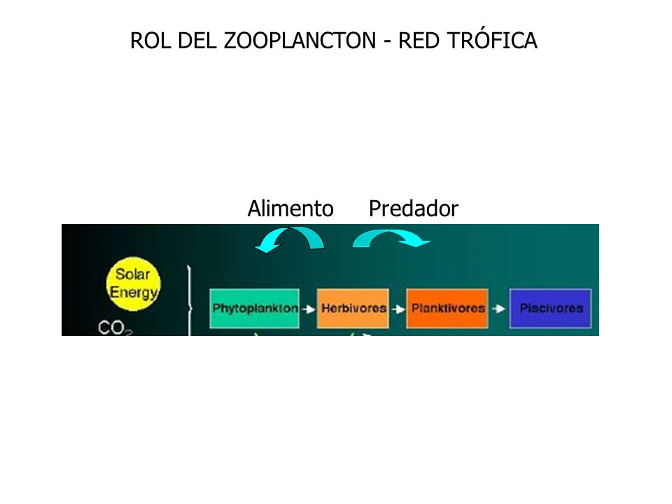 ROL DEL ZOOPLANCTON - RED TRÓFICA