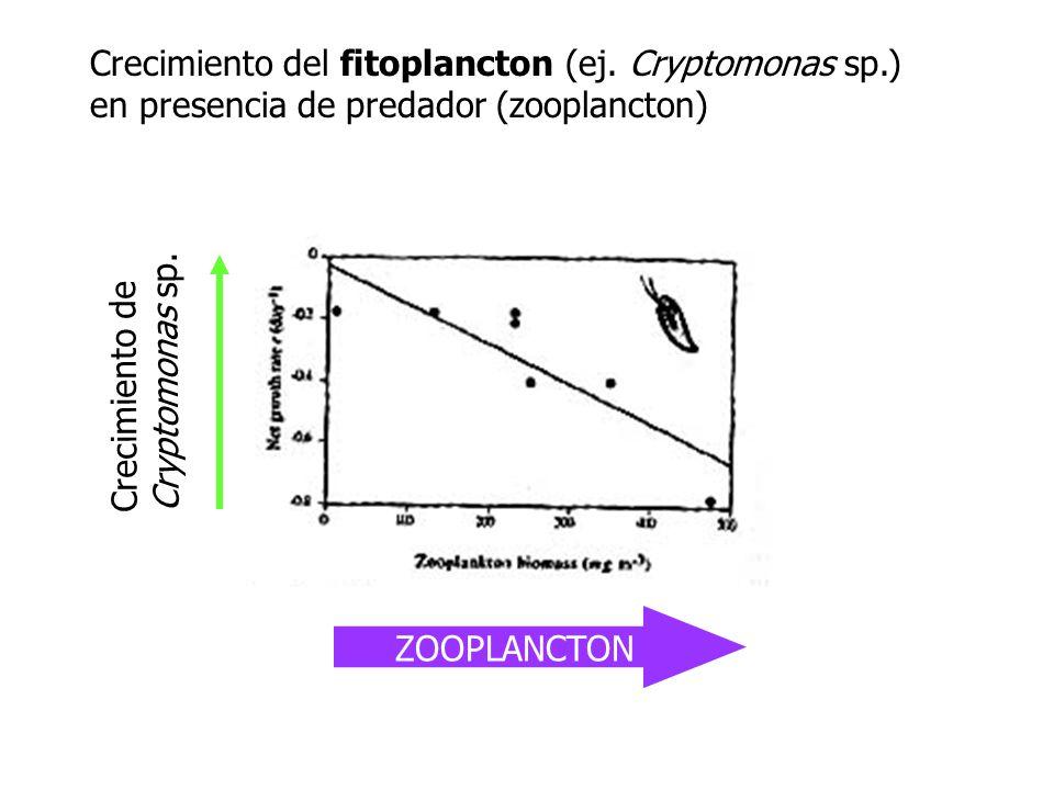 Crecimiento del fitoplancton (ej. Cryptomonas sp