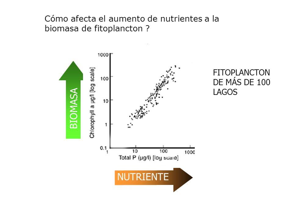 BIOMASA NUTRIENTE Cómo afecta el aumento de nutrientes a la