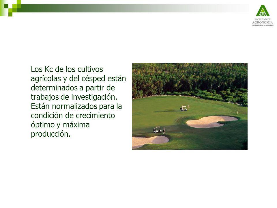 Los Kc de los cultivos agrícolas y del césped están determinados a partir de trabajos de investigación.