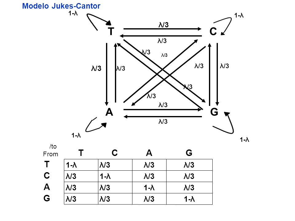 T C A G T C A G T C A G Modelo Jukes-Cantor 1-λ λ/3 λ/3 λ/3 λ/3 1-λ