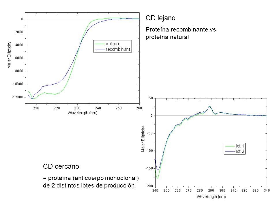 CD lejano CD cercano Proteína recombinante vs proteína natural