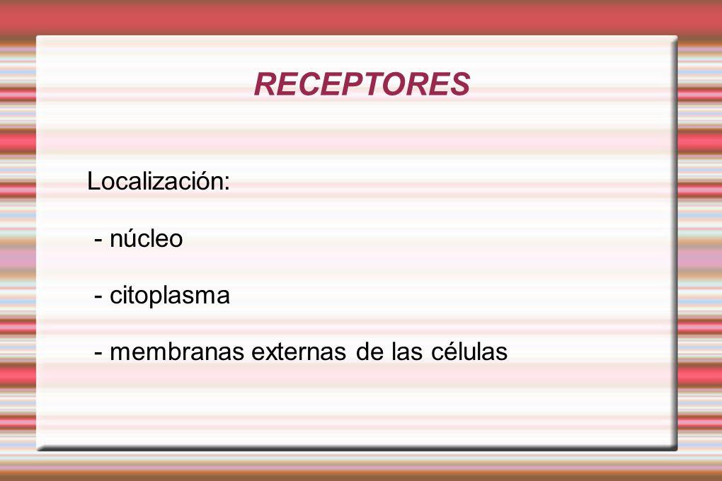 RECEPTORES Localización: - núcleo - citoplasma