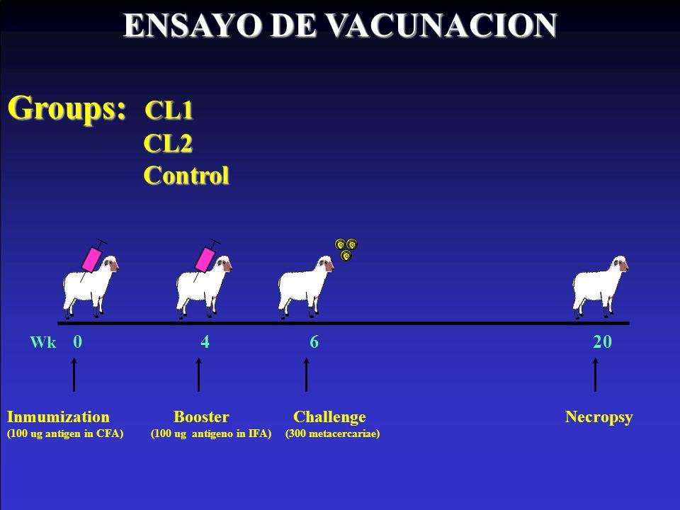 ENSAYO DE VACUNACION Groups: CL1 CL2 Control Wk 0 4 6 20