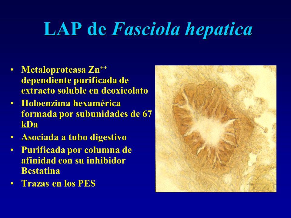 LAP de Fasciola hepatica