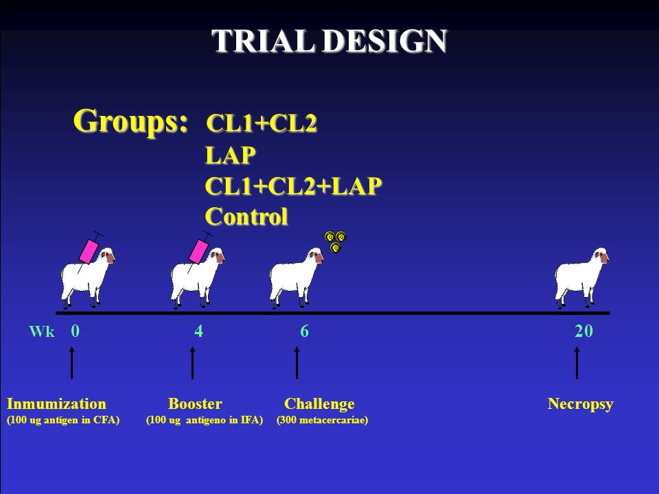 TRIAL DESIGN Groups: CL1+CL2 LAP CL1+CL2+LAP Control Wk 0 4 6 20