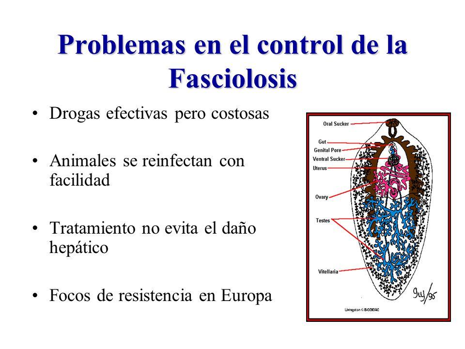 Problemas en el control de la Fasciolosis