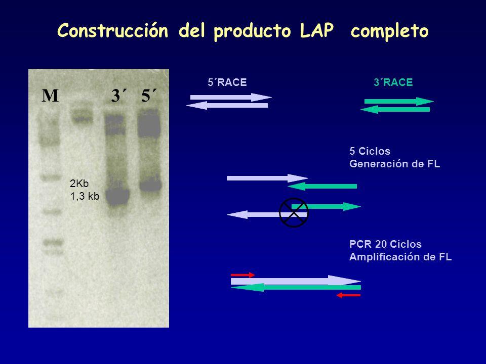 Construcción del producto LAP completo