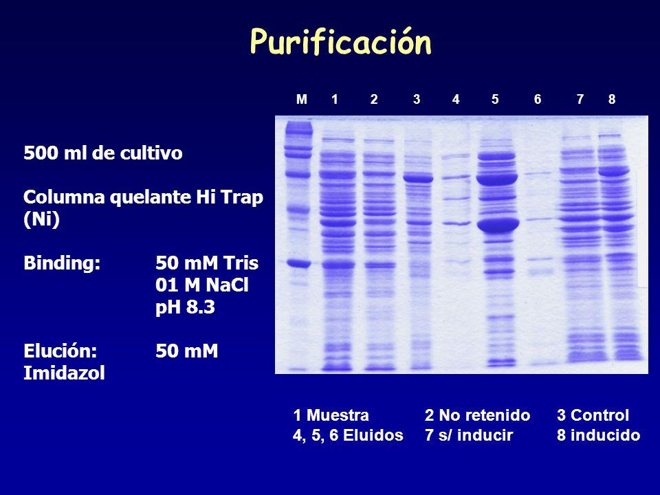 Purificación 500 ml de cultivo Columna quelante Hi Trap (Ni)