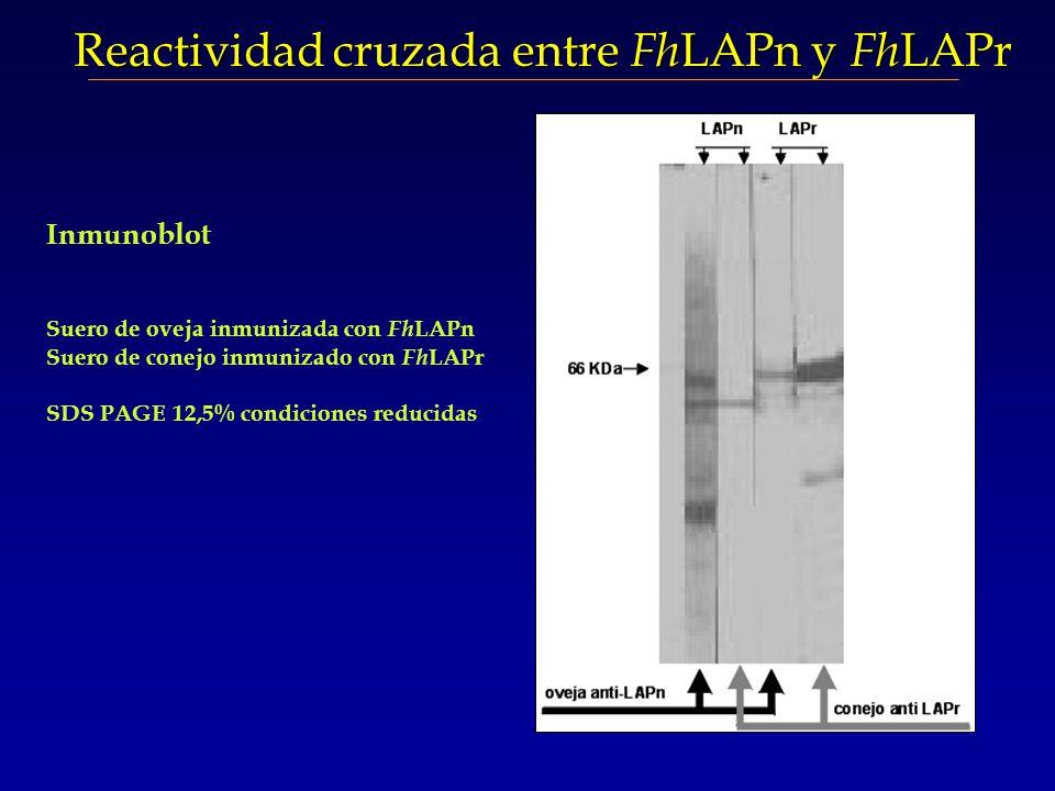 Reactividad cruzada entre FhLAPn y FhLAPr