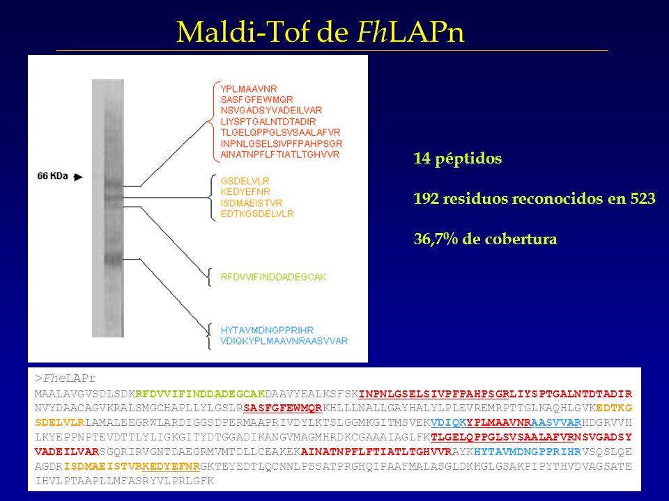 Maldi-Tof de FhLAPn 14 péptidos 192 residuos reconocidos en 523