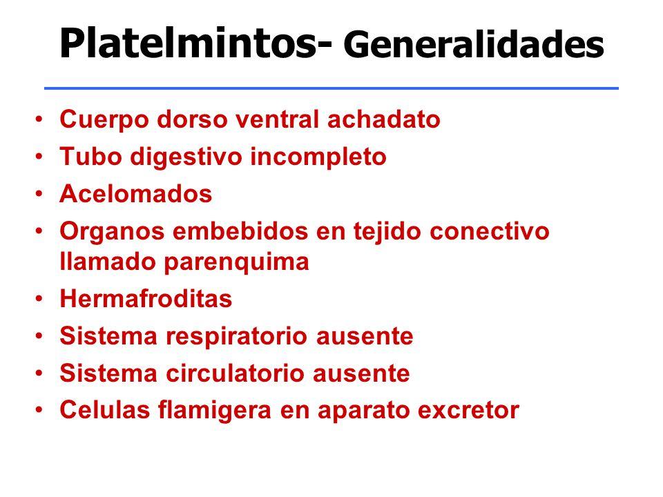 Platelmintos- Generalidades