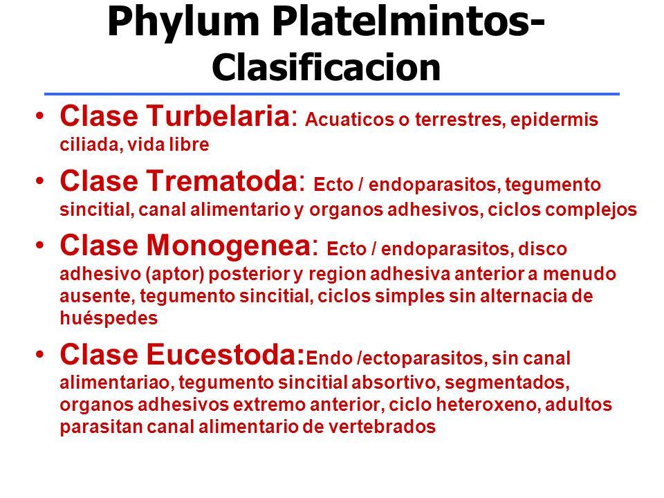 Phylum Platelmintos- Clasificacion