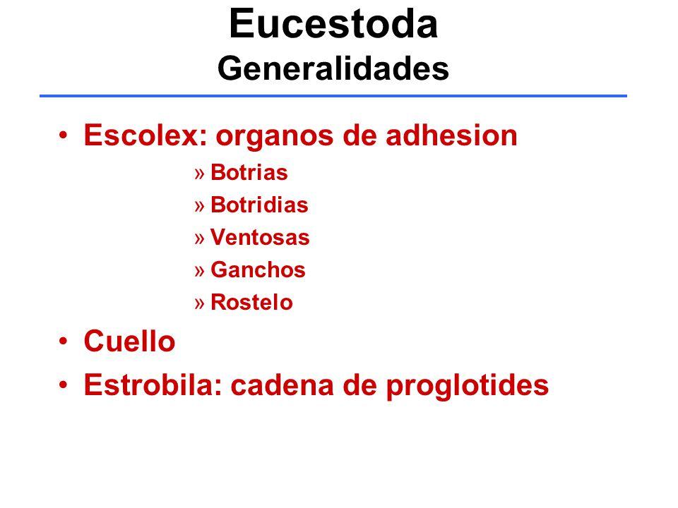 Eucestoda Generalidades
