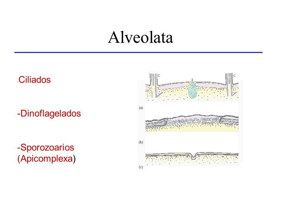 Alveolata -Ciliados Dinoflagelados Sporozoarios (Apicomplexa)