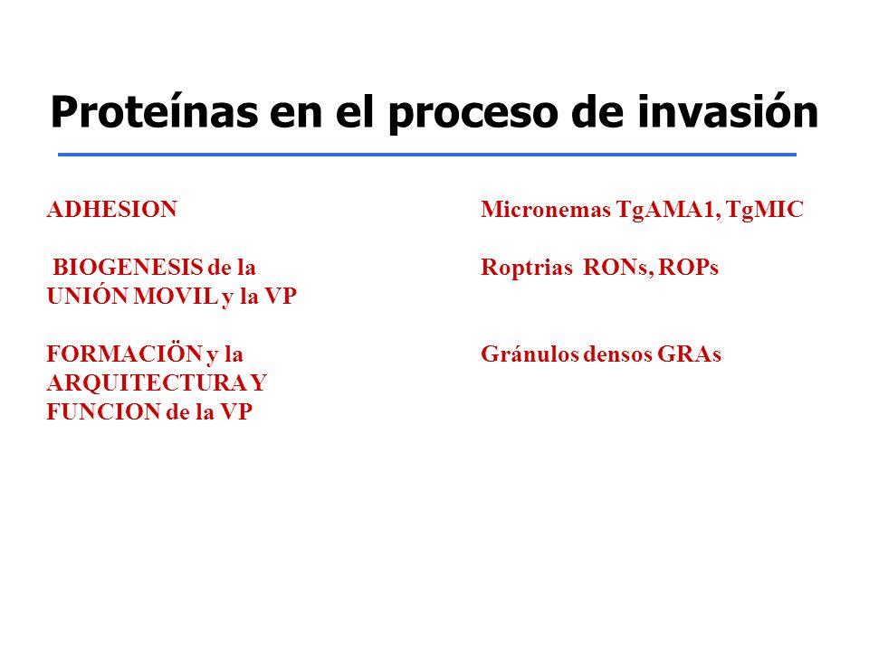 Proteínas en el proceso de invasión