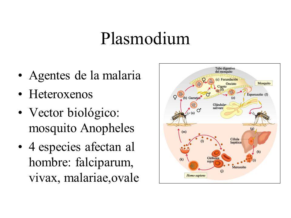 Plasmodium Agentes de la malaria Heteroxenos