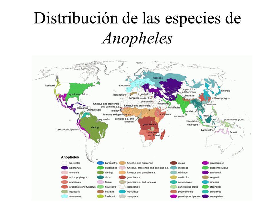 Distribución de las especies de Anopheles