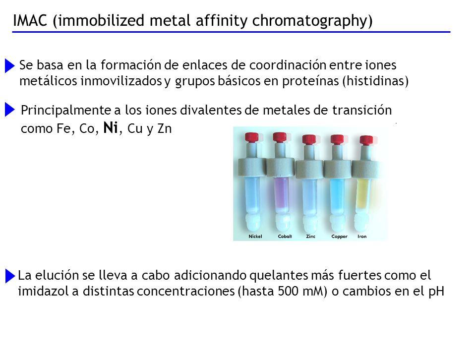 IMAC (immobilized metal affinity chromatography)