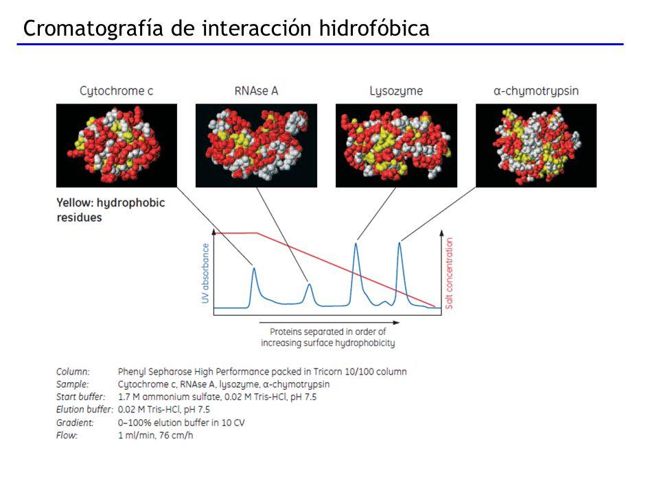Cromatografía de interacción hidrofóbica