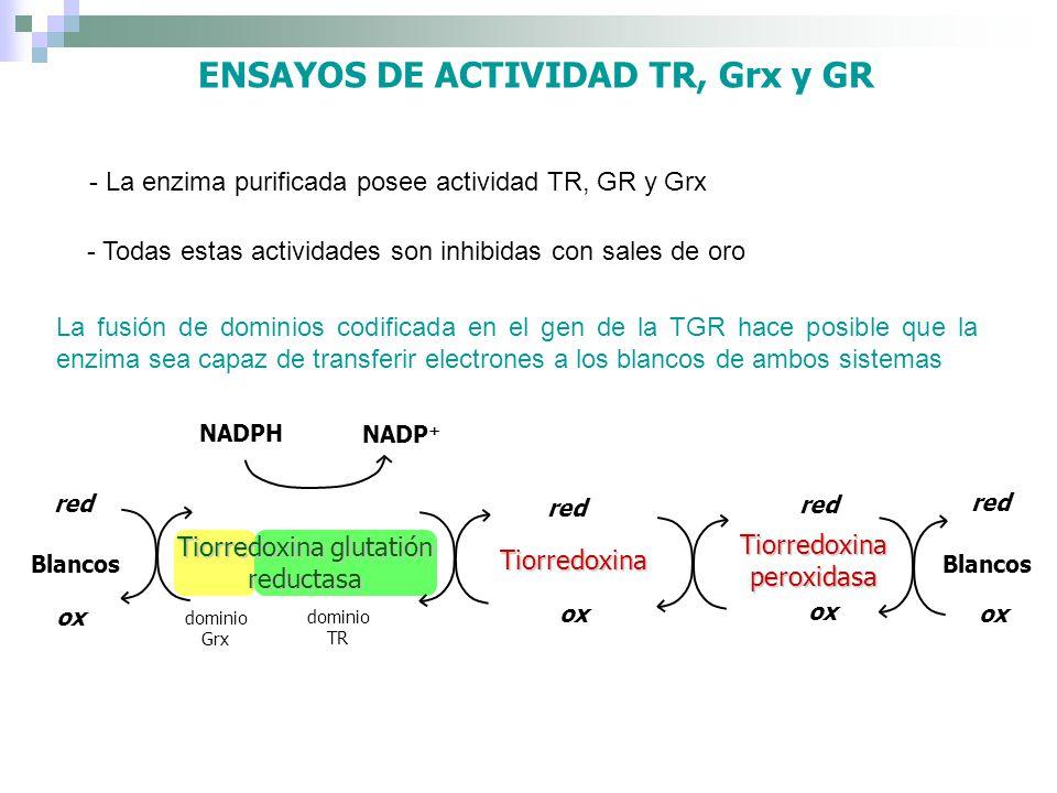 ENSAYOS DE ACTIVIDAD TR, Grx y GR