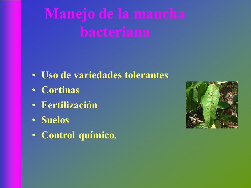 Manejo de la mancha bacteriana