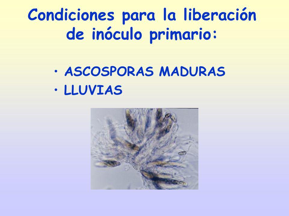 Condiciones para la liberación de inóculo primario: