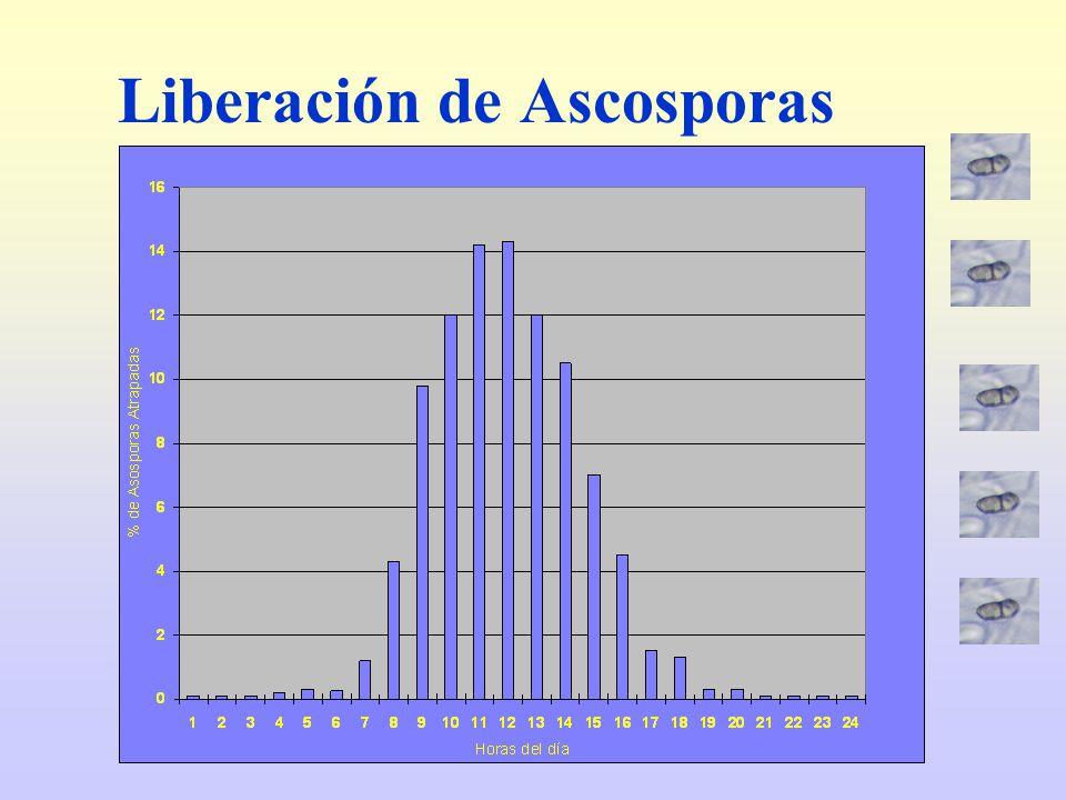 Liberación de Ascosporas