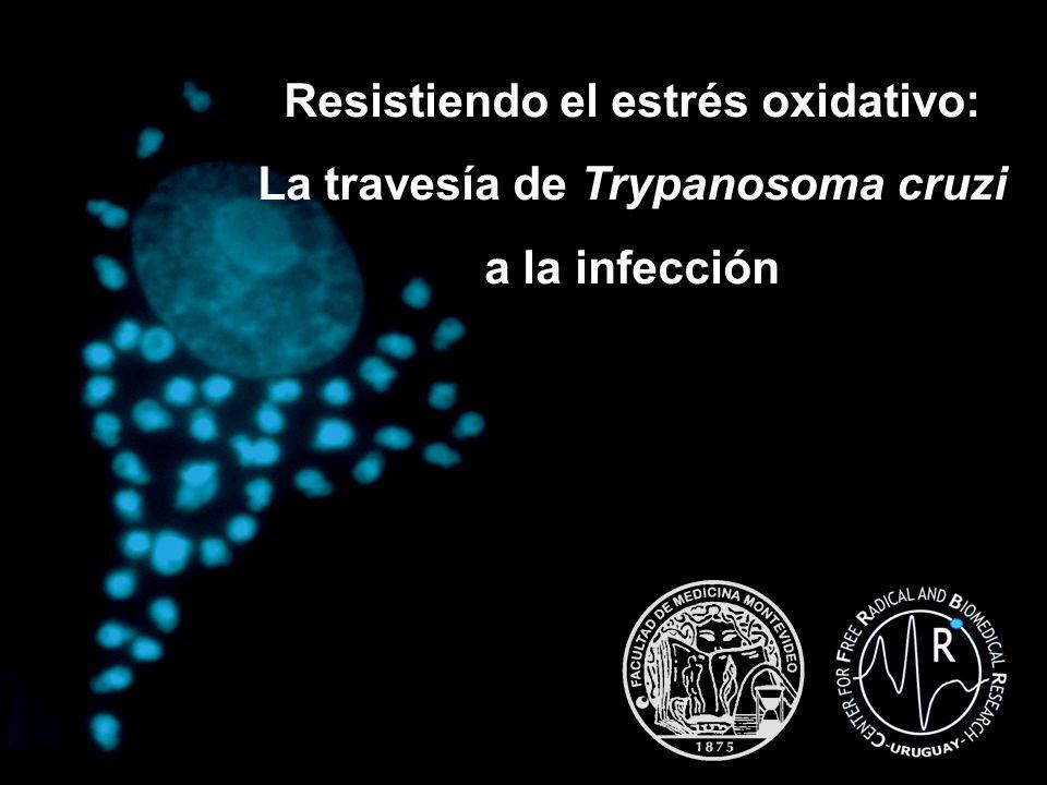 Resistiendo el estrés oxidativo: La travesía de Trypanosoma cruzi