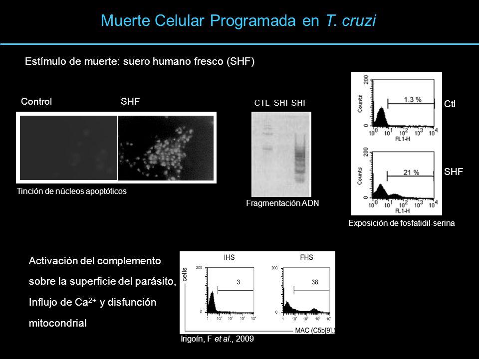 Muerte Celular Programada en T. cruzi