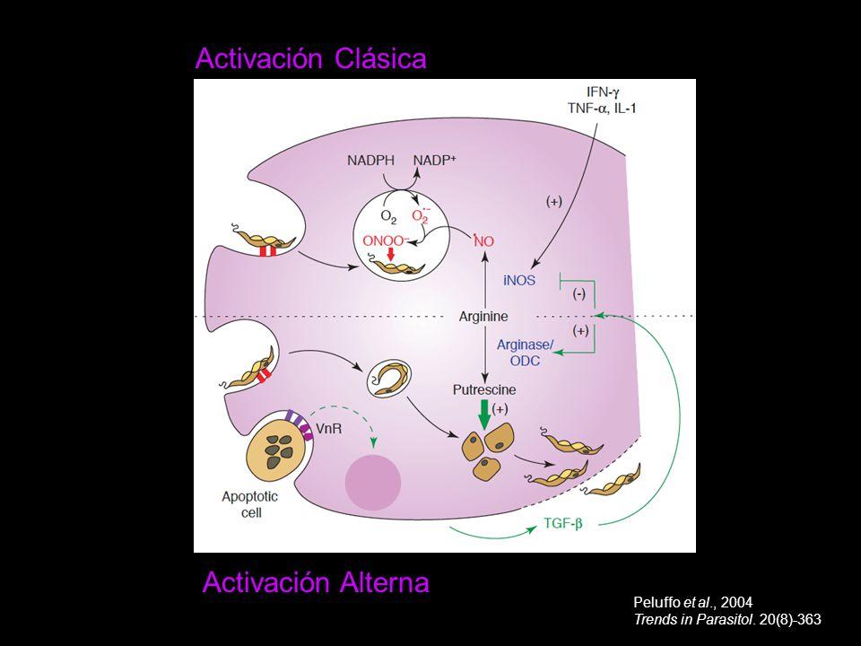 Activación Clásica Activación Alterna Peluffo et al., 2004