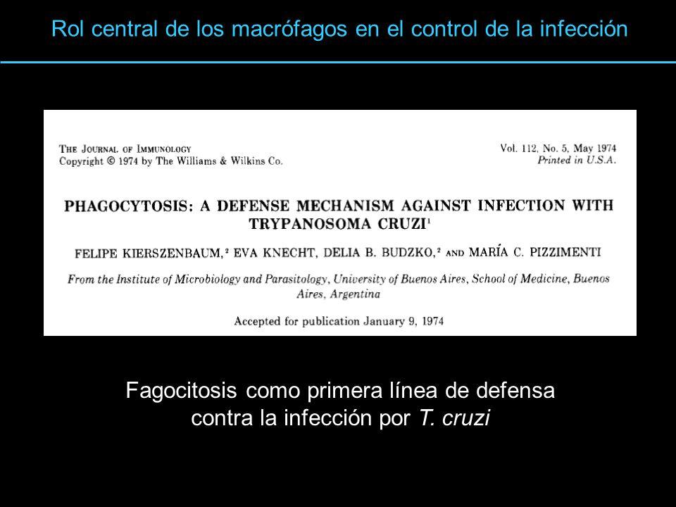 Rol central de los macrófagos en el control de la infección