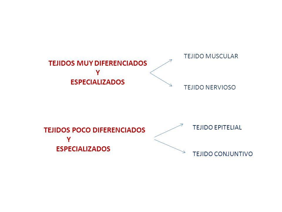 TEJIDOS MUY DIFERENCIADOS Y ESPECIALIZADOS