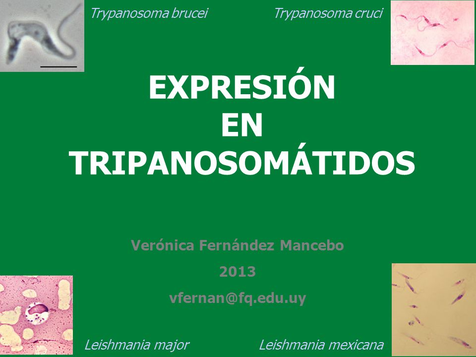 EXPRESIÓN EN TRIPANOSOMÁTIDOS
