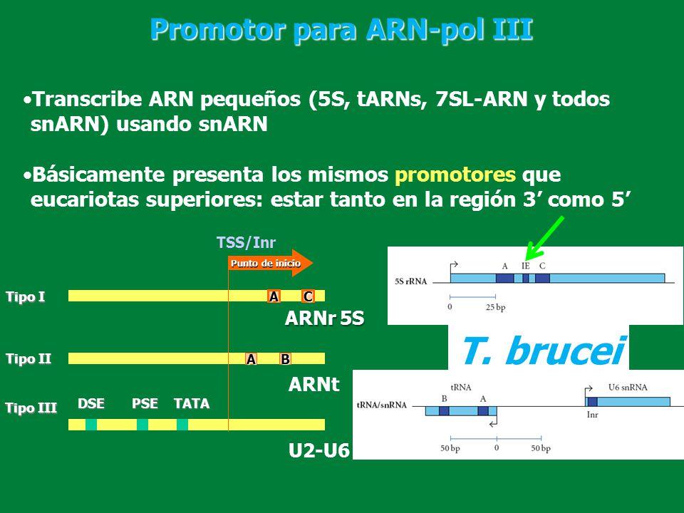 T. brucei Promotor para ARN-pol III