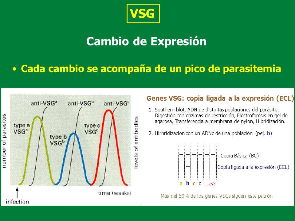 VSG Cambio de Expresión