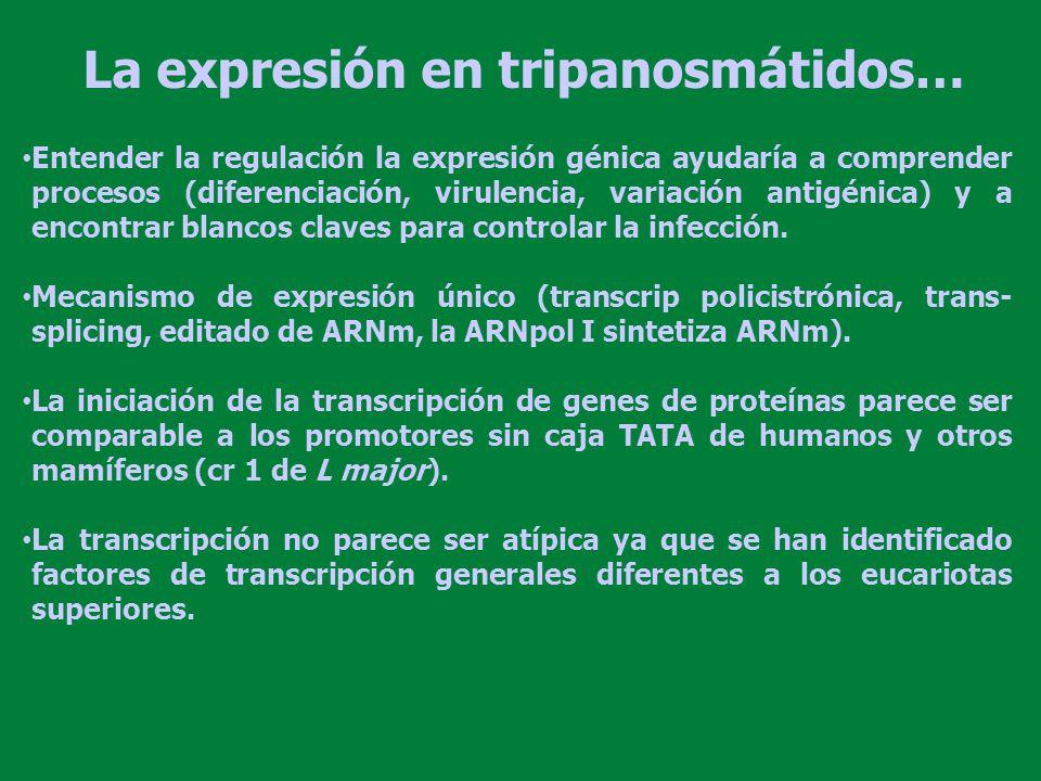 La expresión en tripanosmátidos…