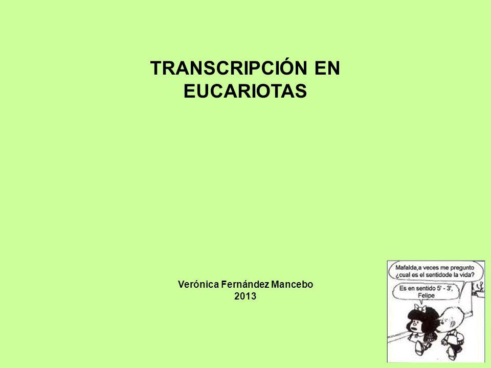 TRANSCRIPCIÓN EN EUCARIOTAS Verónica Fernández Mancebo