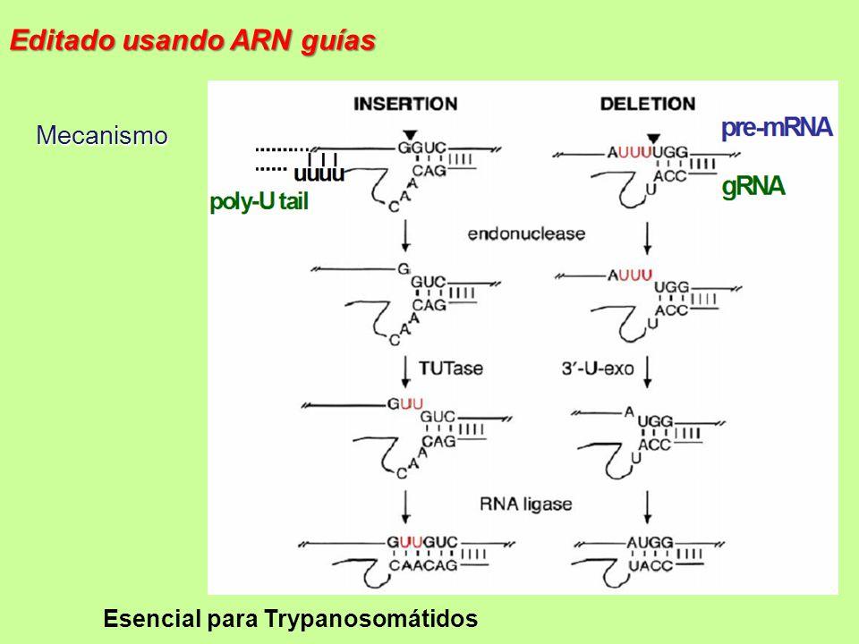 Editado usando ARN guías
