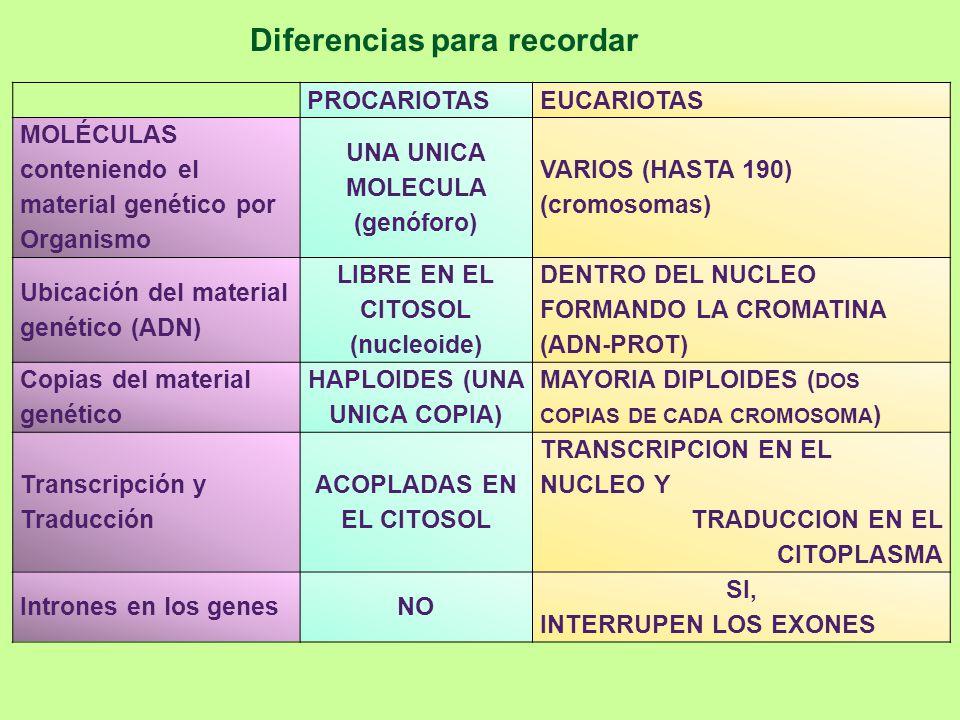 Diferencias para recordar