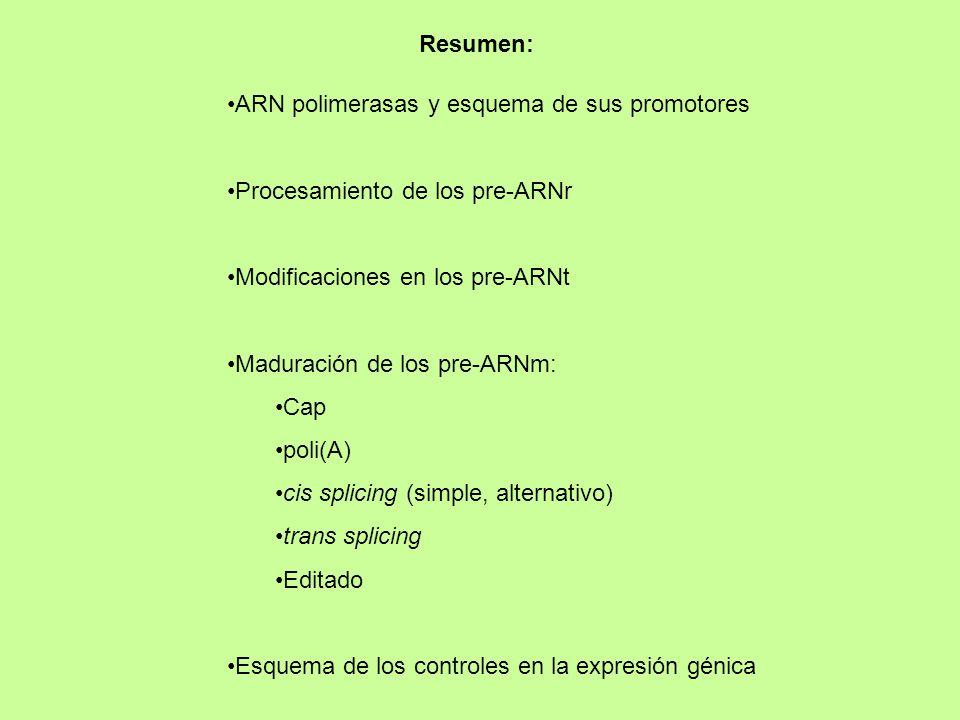 Resumen: ARN polimerasas y esquema de sus promotores. Procesamiento de los pre-ARNr. Modificaciones en los pre-ARNt.