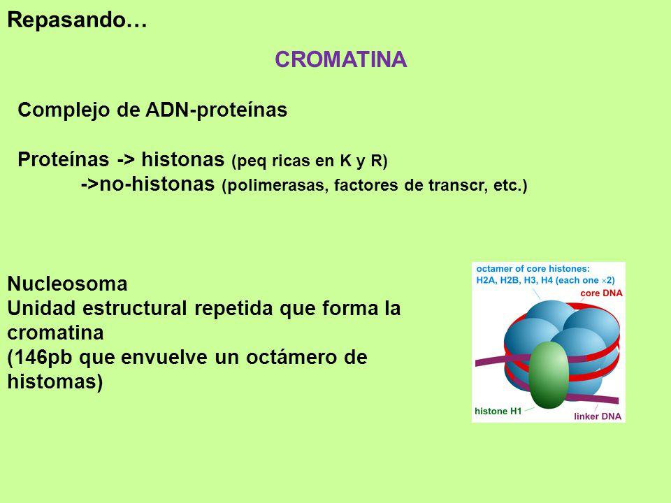 Repasando… CROMATINA Complejo de ADN-proteínas