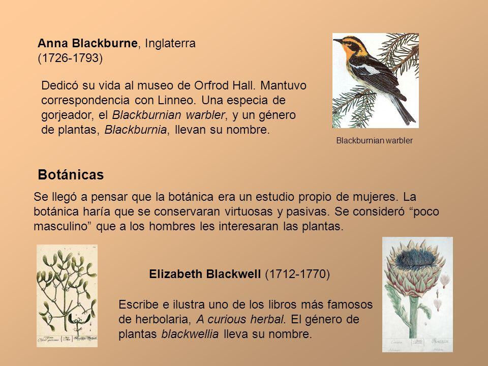 Botánicas Anna Blackburne, Inglaterra (1726-1793)