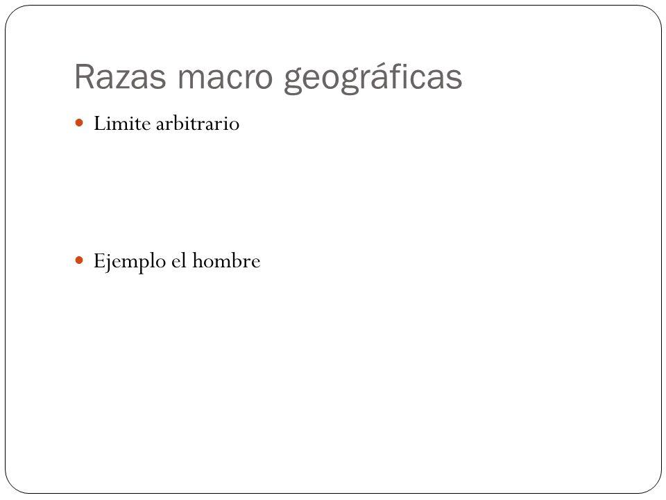 Razas macro geográficas