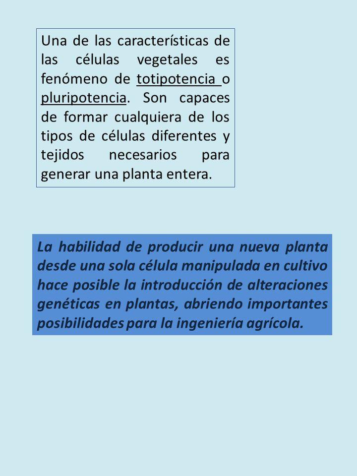Una de las características de las células vegetales es fenómeno de totipotencia o pluripotencia. Son capaces de formar cualquiera de los tipos de células diferentes y tejidos necesarios para generar una planta entera.