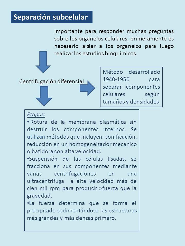 Separación subcelular