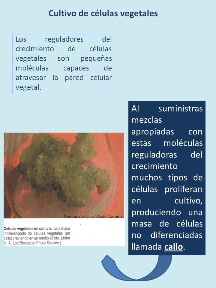 Cultivo de células vegetales