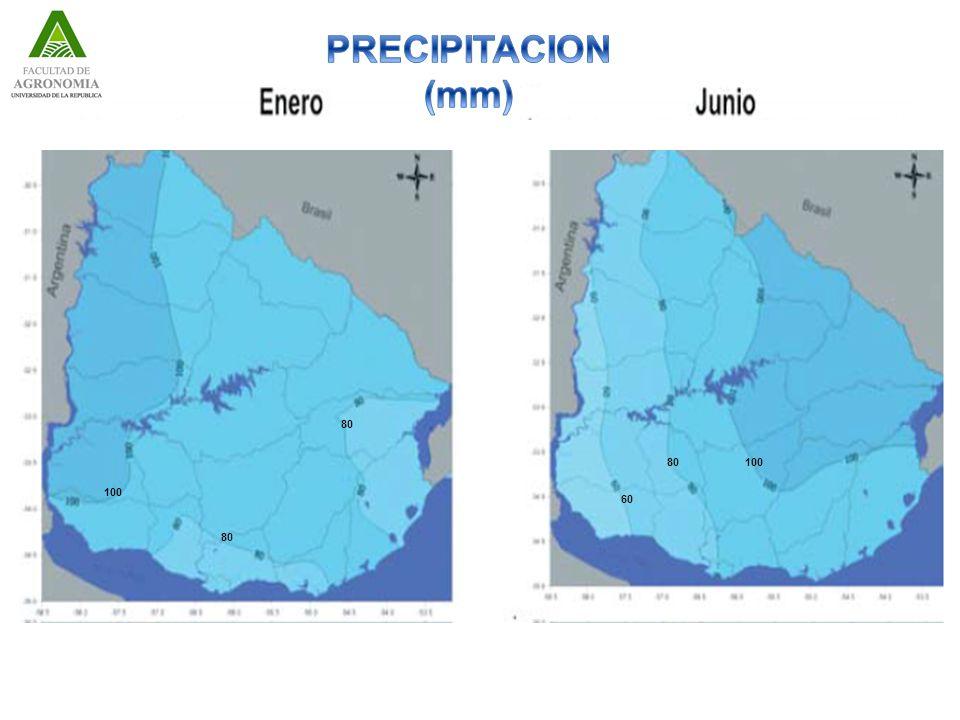 PRECIPITACION (mm) 80 80 100 100 60 80